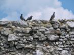 """opty49 """""""" (2012-09-05 18:50:02) komentarzy: 2, ostatni: gołębie nie są tu lubiane... trudno dobrze pokazać"""