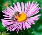 """tryksa """"\\""""przystanek\\"""""""" (2012-09-15 15:50:39) komentarzy: 5, ostatni: przez jasność strasznie kudłata pszczoła wyszła, ale poza tym ok, pozytywnie wygląda ;)"""
