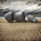"""klimat """"Przerąbane"""" (2012-09-19 21:45:45) komentarzy: 19, ostatni: wypas"""