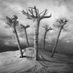 """klimat """"Ogród Edenu"""" (2012-09-24 16:00:50) komentarzy: 15, ostatni: !!!"""
