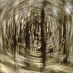 """j2p """"pokręcona sprawa z lasem .."""" (2012-09-30 21:56:50) komentarzy: 7, ostatni: Lepij tak iść, niż po chodnikach....."""