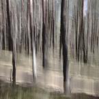 """j2p """"rozmazana sprawa z lasem .."""" (2012-09-30 22:25:00) komentarzy: 13, ostatni: Rewelacja... pozdro"""