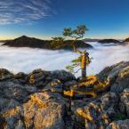 """marcinkesek """"pienieńskie bonsai"""" (2012-10-03 19:08:10) komentarzy: 32, ostatni: bardzo ładnie wkomponowały się promienie w pierwszy plan, piękne fotoujęcie"""