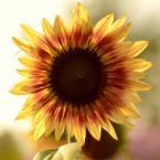 "Romek P. PISZ ""Śłońce"" (2012-10-04 19:55:18) komentarzy: 0, ostatni:"