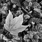 """tward """"..."""" (2012-10-12 16:08:38) komentarzy: 2, ostatni: Pięknie, jesiennie"""