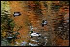 """Damian Kierozalski """"..."""" (2012-10-18 10:29:30) komentarzy: 1, ostatni: Woda wyszła pięknie .bez kaczek byłoby ciekawie:)"""