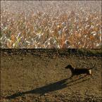 """poganka """"... a w domyśle Jamka"""" (2012-10-19 21:31:41) komentarzy: 19, ostatni: się wpiszę też, bo jestem wierny (między piętnastą, a szesnastą) jak pies swoim boginiom fotograficznym :D Poganka wracaj!"""