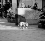 """ania wiech """"ludzie psy"""" (2012-10-21 21:48:35) komentarzy: 3, ostatni: trafiające przesłanie i do tego podane ładnie, dużo opowiada"""
