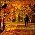 """bartmark """"Październikowy poranek"""" (2012-10-23 09:17:21) komentarzy: 18, ostatni: świetne"""