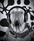 """Arnold Ochman """"music lover"""" (2012-10-23 12:05:43) komentarzy: 8, ostatni: ich habe den Namen vergessen"""