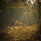 """Kimi """"W jesiennym świetle"""" (2012-10-24 11:27:54) komentarzy: 16, ostatni: poetyckie jak rzadko, warto zaglądać"""