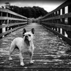 """Meller """"Cogito Ergo Sum"""" (2012-10-24 23:39:49) komentarzy: 8, ostatni: psa zabieram a Tobie zostawiam maxa . kapitalne foto !!!"""
