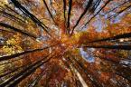 """newuser """""""" (2012-10-30 12:06:33) komentarzy: 2, ostatni: sympatyczne"""