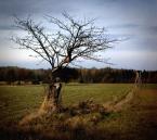 """arche """"Drzewo samotne"""" (2012-11-04 17:53:18) komentarzy: 3, ostatni: spoko Wodza :) co do opisu ---> super ja nie mam czasu nawet na kawę po ludzku mimo że 4 dziennie idą :("""
