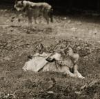 "2good2bwrong ""Dances with Wolves"" (2012-11-11 19:29:56) komentarzy: 3, ostatni: ok"