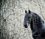 "Maskotka ""Aiso"" (2012-11-11 23:33:32) komentarzy: 3, ostatni: Witraże"