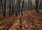 """Konsul """"jesienne ostatki"""" (2012-11-13 15:43:41) komentarzy: 6, ostatni: jesienna klasyka"""