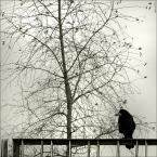 """ramumajana """"ptaszek"""" (2012-11-13 21:56:53) komentarzy: 2, ostatni: Szczęśliwa, płot bez drutu kolczastego"""