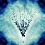 """Arek Kikulski """"Blue pearls"""" (2012-11-22 20:50:43) komentarzy: 5, ostatni: dziękuje:)"""