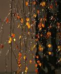 """Anka """"jesiennie"""" (2012-11-24 17:27:15) komentarzy: 42, ostatni: Cudeńko w każdej kropelce....mmmm...kocham takie proste, zwyczajne niby drzenie."""