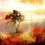 """Arek Kikulski """"w myślach mych...czai się..."""" (2012-11-28 20:47:27) komentarzy: 29, ostatni: To ja tylko będę patrzeć ..."""