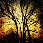 """f a b r o o """"Sny Poplątane..."""" (2012-12-01 20:30:14) komentarzy: 33, ostatni: (wydaje mi się, ze mój odbyt jest realny) (;)"""