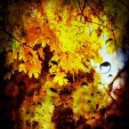 """f a b r o o """"Jesieni Wspomnienie..."""" (2012-12-02 20:00:42) komentarzy: 86, ostatni: +:)"""