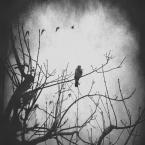 """f a b r o o """"GRUDZIEŃ na Drzewie..."""" (2012-12-05 08:40:25) komentarzy: 18, ostatni: piekny obraz"""