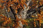 """barszczon """"taka jesienna impresyjka"""" (2012-12-08 19:02:06) komentarzy: 12, ostatni: :)"""