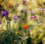 """slw """"""""Chaos"""""""" (2012-12-14 00:29:59) komentarzy: 23, ostatni: ładne kwiatki :)"""