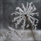 """Miras40 """"gwiezdne wojny"""" (2012-12-17 12:18:24) komentarzy: 23, ostatni: Mroźny wiatraczek, idealny na upalne dni ..."""