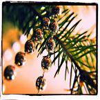 """enoa """"Wesołych Świąt i Do siego Roku!"""" (2012-12-24 23:42:22) komentarzy: 4, ostatni: ... :))) ..."""