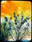 "nomaderro ""armagedon"" (2013-01-16 22:35:48) komentarzy: 1, ostatni: Ładnie namalowane"