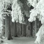 """Anka """"zima"""" (2013-01-21 09:50:43) komentarzy: 207, ostatni: bdb ! super oszronione, ośnieżone :)"""
