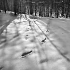 """Nickita """"zimowo/w/zimie"""" (2013-01-27 21:14:31) komentarzy: 0, ostatni:"""
