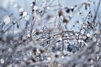 """inezz-ka """"szklane paciorki"""" (2013-01-30 10:24:50) komentarzy: 2, ostatni: dziękuję :-) miło że się podoba.. oj taka zima to skarb do fotografowania :-)"""