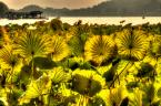 """Cezary Filew """"Oświecenie w Kwiecie Lotosu"""" (2013-01-31 02:41:23) komentarzy: 40, ostatni: super..:))"""