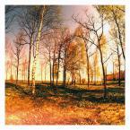 """irmi """""""" (2013-02-02 19:43:54) komentarzy: 3, ostatni: jak sfocić kawał równiny z drzewami by wyszło ciekawie - wieloletnia dla mnie zagadka... ale tu się udało i za to skłaniam się nisko. Ciekawe zdjęcie :)"""