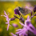 """Łukasz Pluta """""""" (2013-02-04 23:13:24) komentarzy: 2, ostatni: kiepskie motylowe foto ..."""