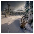 """paweljg """"***"""" (2013-02-11 18:58:46) komentarzy: 34, ostatni: W tym krajobrazie """"przyszywa""""wzrok ten """"ścieg"""" na śniegu :)"""