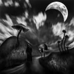 """Arek Kikulski """"halucynogenne myśli..."""" (2013-02-19 21:34:29) komentarzy: 8, ostatni: Piotr - Iberica pewnie ,że się podziele..."""