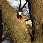 """miastokielce """"Ul. Paderewskiego; Kielce"""" (2013-02-23 16:31:21) komentarzy: 1, ostatni: drzewo piwne, liściaste..."""