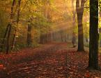 """Frąckiewicz """"jesienny poranek"""" (2013-02-26 14:47:14) komentarzy: 30, ostatni: przyjemnie"""
