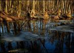 """BALTORO """"wiosna w olszynach"""" (2013-03-07 12:09:50) komentarzy: 2, ostatni: bardzo lubię takie klimaty... sam szukam teraz mokrego olsu, wszystkie wokoło wyschły... :( nie ma po co wracać w ulubione miejsca. Foto:[++++-]"""