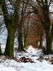 """BJZ """"Droga"""" (2013-03-19 06:54:08) komentarzy: 5, ostatni: W Wierzenicy miałem wesele :))) uwielbiam te okolice"""