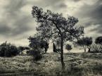 """atenytom """"Zeusowe ogrody"""" (2013-03-23 19:53:00) komentarzy: 0, ostatni:"""