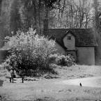 """slw """"..."""" (2013-03-24 03:17:45) komentarzy: 6, ostatni: Kocham takie miejsca, jakby zagubione, gdzie można w skupieniu pomyśleć o tym , co przed i za i z ptakiem  porozmawiać. Cisza taka..."""