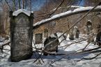 """Zbigniew Fidos """"kirkut w Łodzi"""" (2013-03-25 12:13:57) komentarzy: 2, ostatni: te zagałęzienia tworzą niesamowity klimat tego miejsca i to dobrze, że są one sprzątane nie dość dokładnie :o)"""
