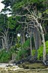 """wizental """"okruch w wielkim lesie"""" (2013-03-25 18:10:13) komentarzy: 3, ostatni: drzewa olbrzymy"""