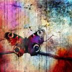 """Arek Kikulski """"ulotność marzeń"""" (2013-03-25 21:30:57) komentarzy: 3, ostatni: O jakie to ładne:)... Motylkowa feeria barw."""